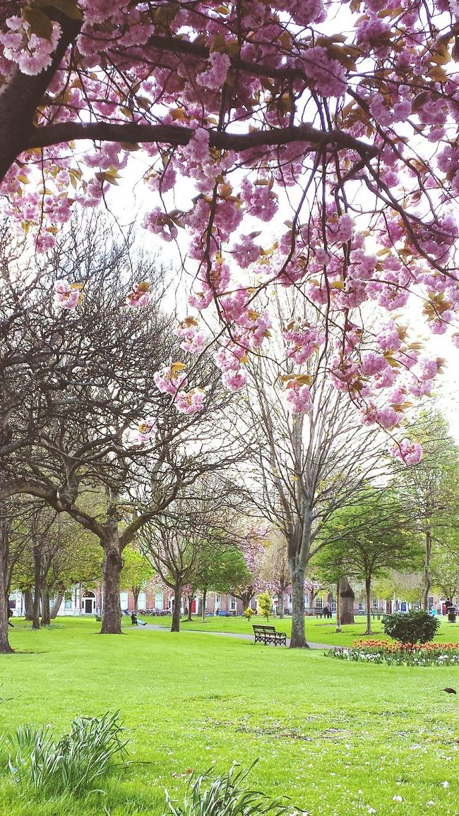 Loving beautiful Dublin in spring. Nature Springhassprung