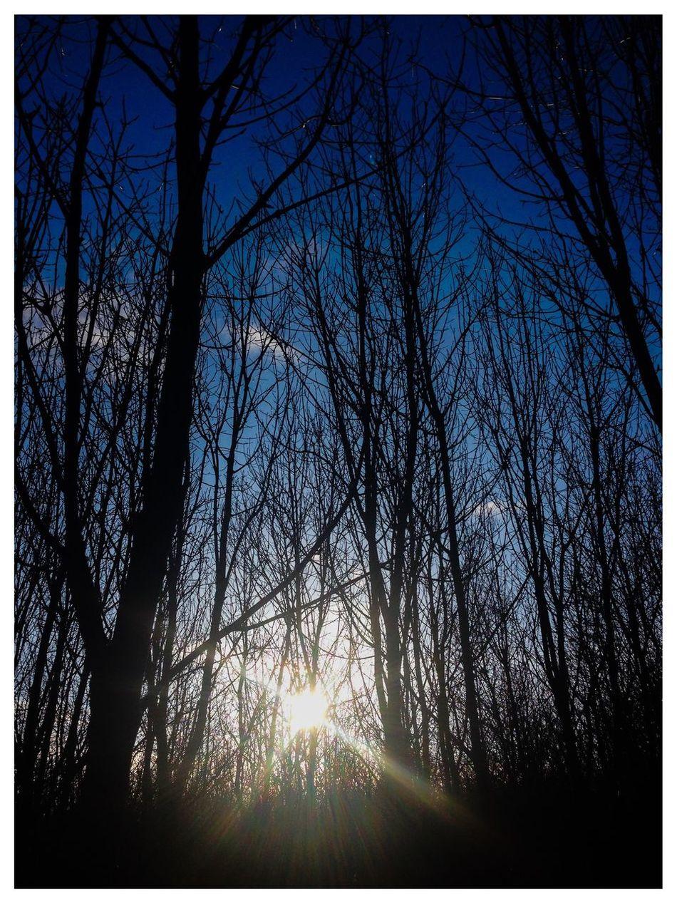 Everyday Joy Countrylife Countryside Winter Sunshine