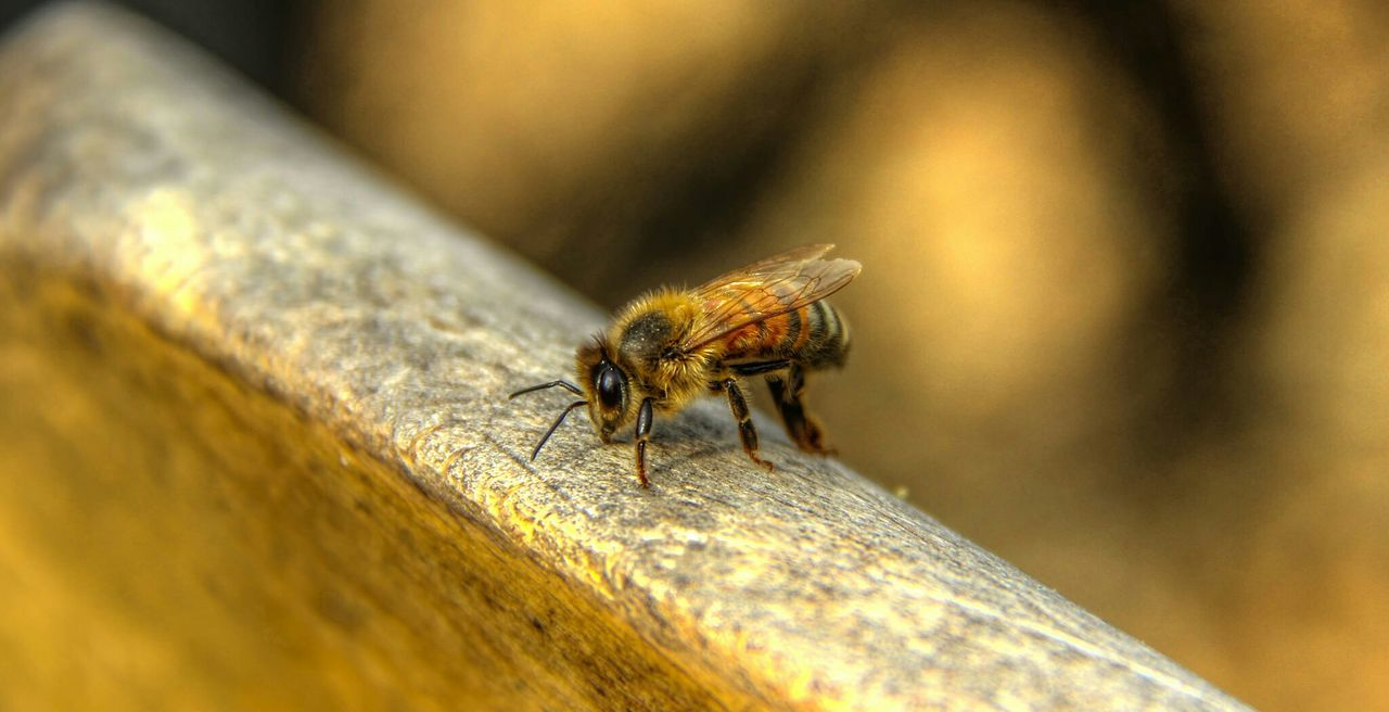 Beautiful stock photos of bee, Animal Themes, Animals In The Wild, Day, Focus On Foreground