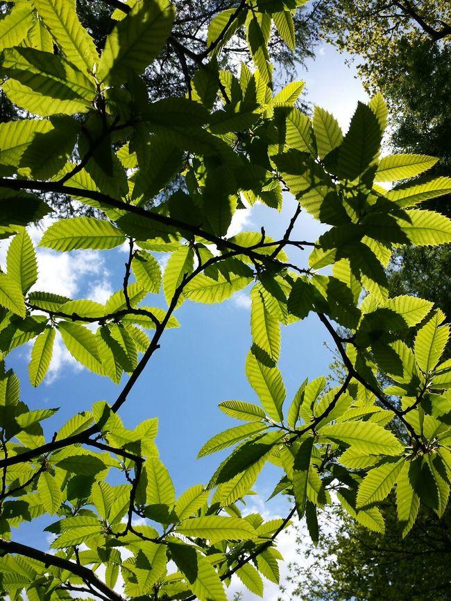 Hare Hill walk, Alderley Edge , The Purist (no Edit, No Filter) Green Leaves Abstract Woodlandwalks Wallpaper Book Cover