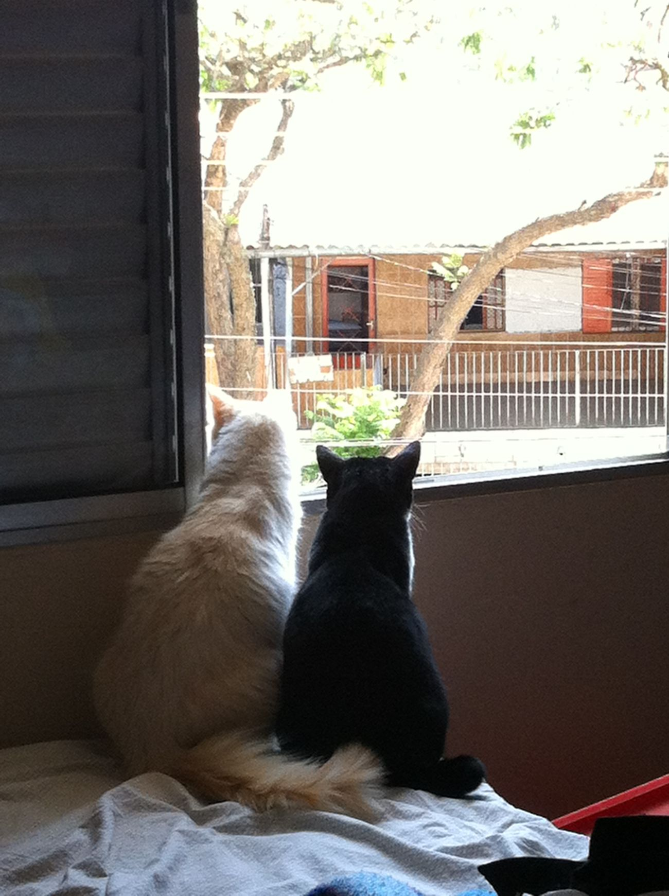 Taking Photos Cat Cats - Tonho e Mabel apreciando a vista
