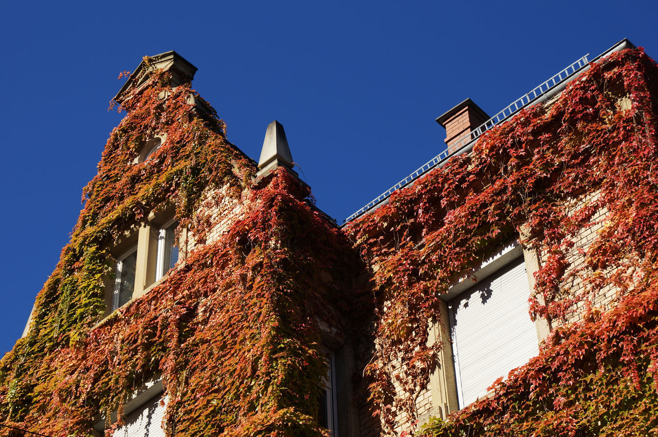 An art nouveau home with red discolored wild wine overgrown. A synonym for autumn in the city Architectural Detail Architecture Architecture_collection Art Nouveau Art Nouveau Architecture Art Nouveau Buildings Autumn Autumn Colors Wine
