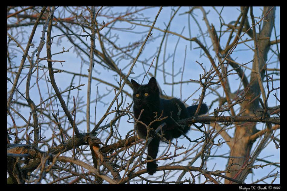 Cat thinks hes a bird Cat♡ Black Feline Sneeky Bird Tree Predator Cats