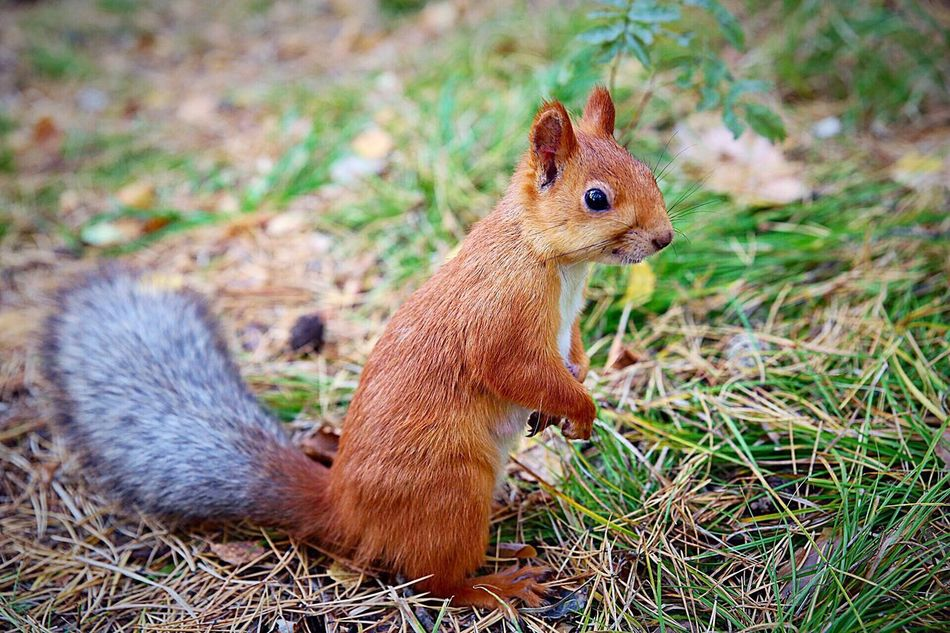 Beautiful stock photos of squirrel, Animal Themes, Animals In The Wild, Berdsk, Day