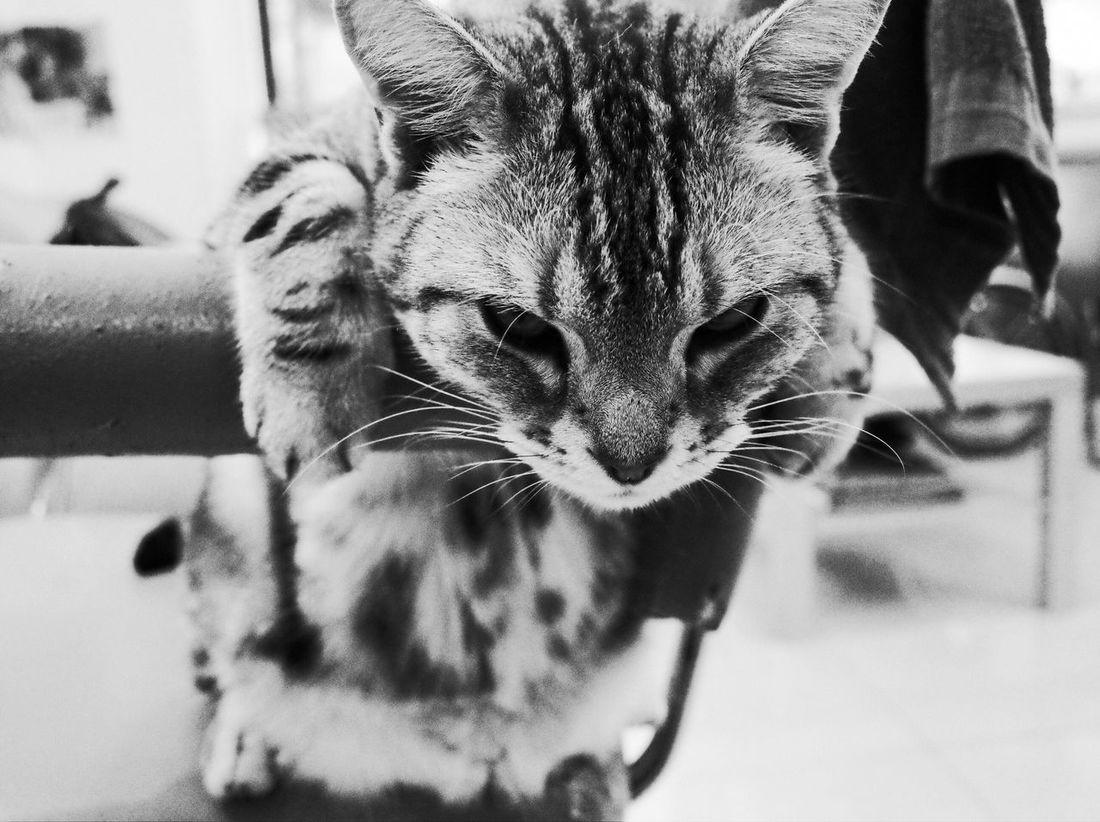懶洋洋,什麼都不想做... Lazy Day Mood From My Point Of View Black And White Cat Animal Photography Still Out  The Essence Of Summer Long Time No See