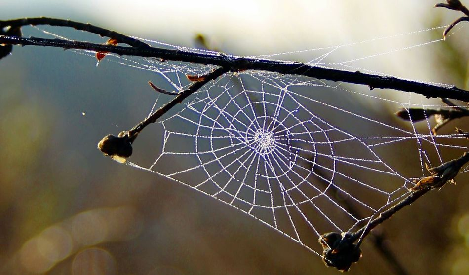 spider web Spider Web Focus On Foreground Outdoors No People Nature Intricacy Beauty In Nature Taking Photos Hiking