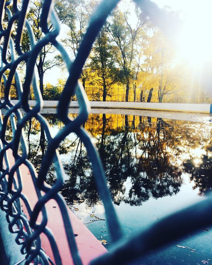 A Canadian autumn Autumn Autumn Leaves Fall Hockey Rink Showcase: November EyeEm Nature Lover IPhoneography Capture The Moment My Neighborhood Leaves Reflection Water Reflections Trees Chain Link Fence Sun Sunlight Morning Light