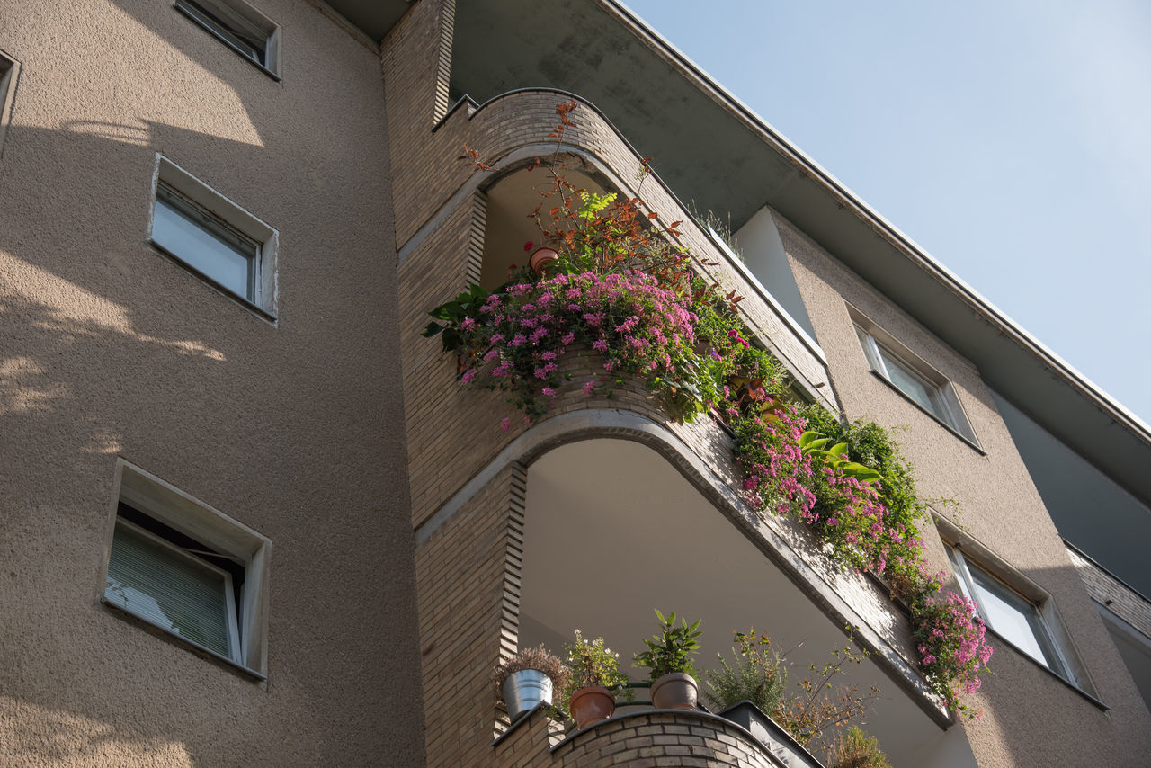 architecture, building exterior, built structure, growth, flower, window, plant, house, low angle view, balcony, outdoors, no people, day, nature, window box
