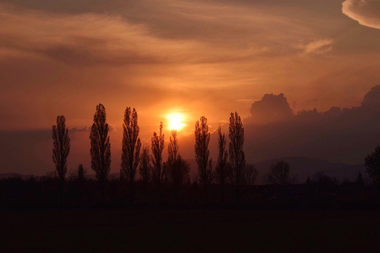 Sunsets in Austria Sunset Nature Sky Orange Color Silhouette Sun Tree Cloud - Sky Landscape Nikond5300