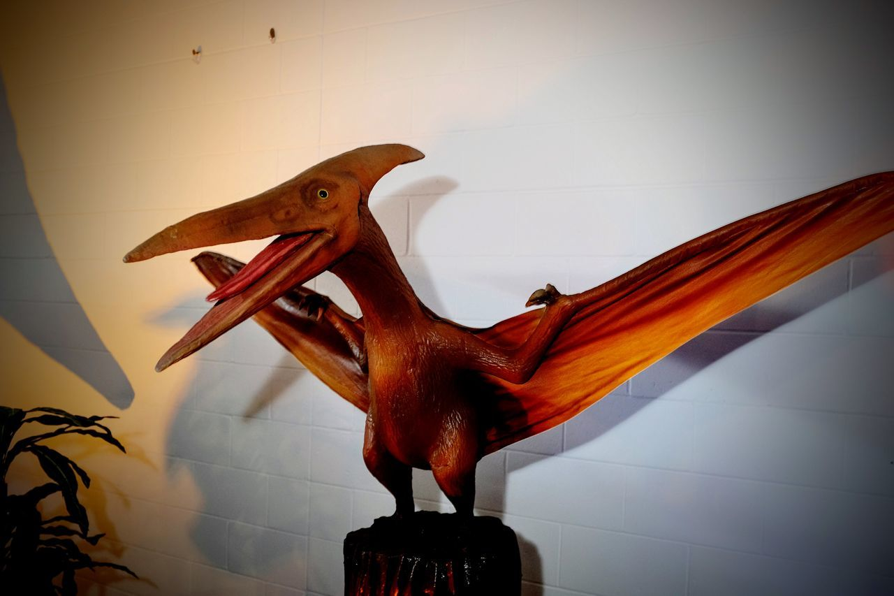 Nebraska State Fair - Grand Island, Nebraska August 2016 Agriculture Americans Animal Representation Beak Camera Work Documentary Extinction Eyeemphoto MidWest Nebraska Paleontology Perching Photo Essay Pterodactyl Pterosaur State Fair Statue Summertime Wingspan