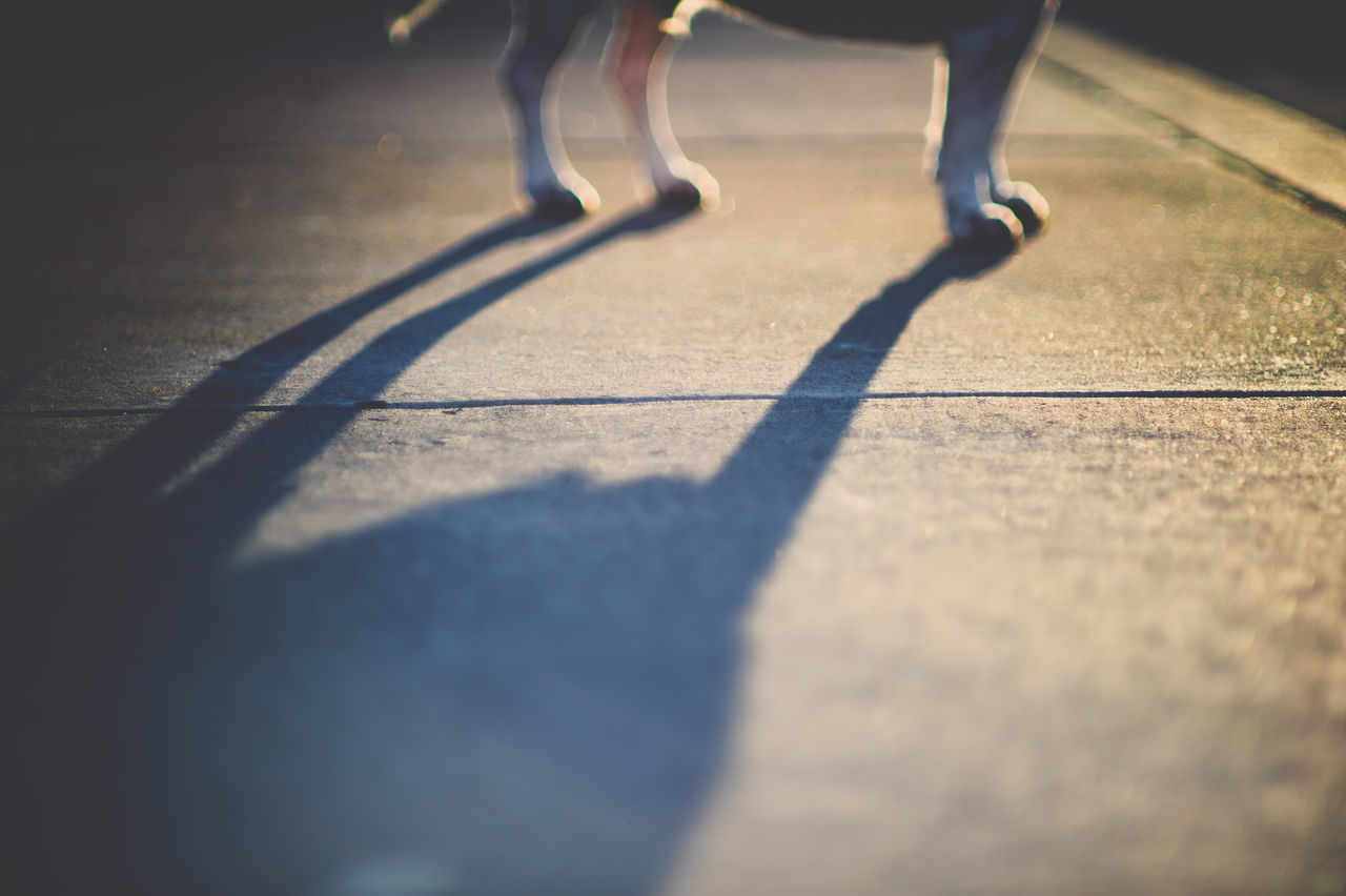 Dog Dog Shadow Dog Shadows Larger Than Life Light And Shadow Light And Shadows No People Pet Photography  Pet Portraits Warm Light Beagle Pet Lifestyle Dog Lifestyle Dramatic Lighting Largerthanlife Larger Than Life