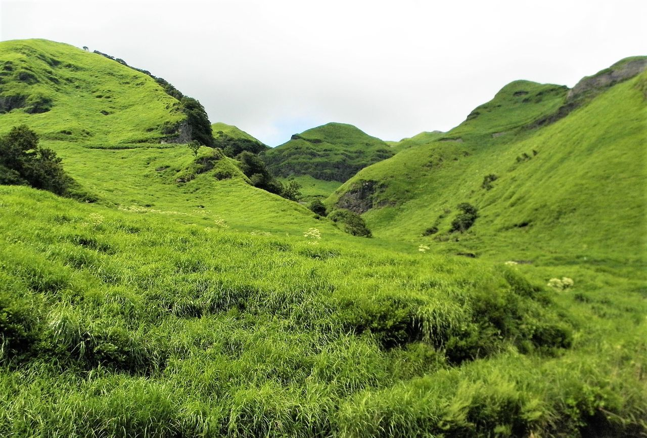 Beauty In Nature Grass Green Green Color Japan Photography Landscape Laputa Road Mountain Nature No People Pasture Land Tranquil Scene