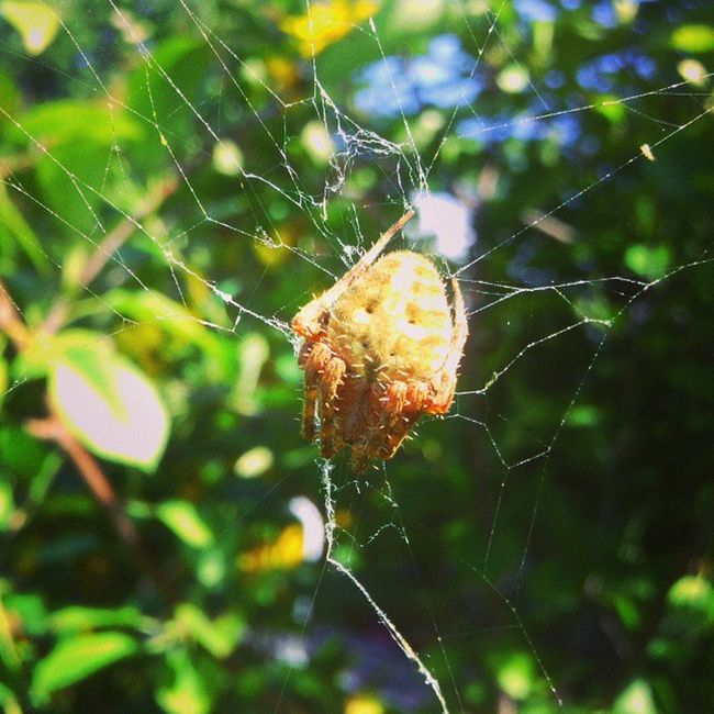 Spider Arachnid Web Resting waiting