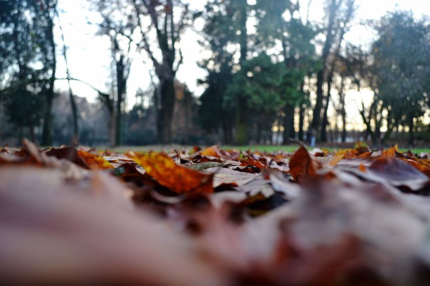 Beauty In Nature Leaves Fallen Tree No People Selective Focus Monza Perspectives On Nature