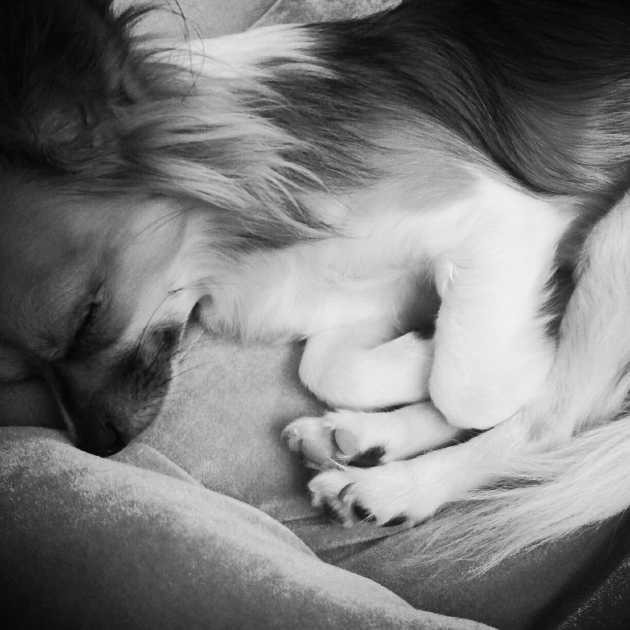 Dog Sleeping On Textile