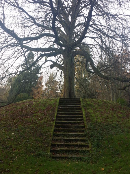Bare Tree Beautiful Nature Beauty In Nature Branch Green Color Knoll Nature Outdoors Silence Solitude Staircase Steps Steps And Staircases The Way Forward Tranquil Scene Tranquility Tree