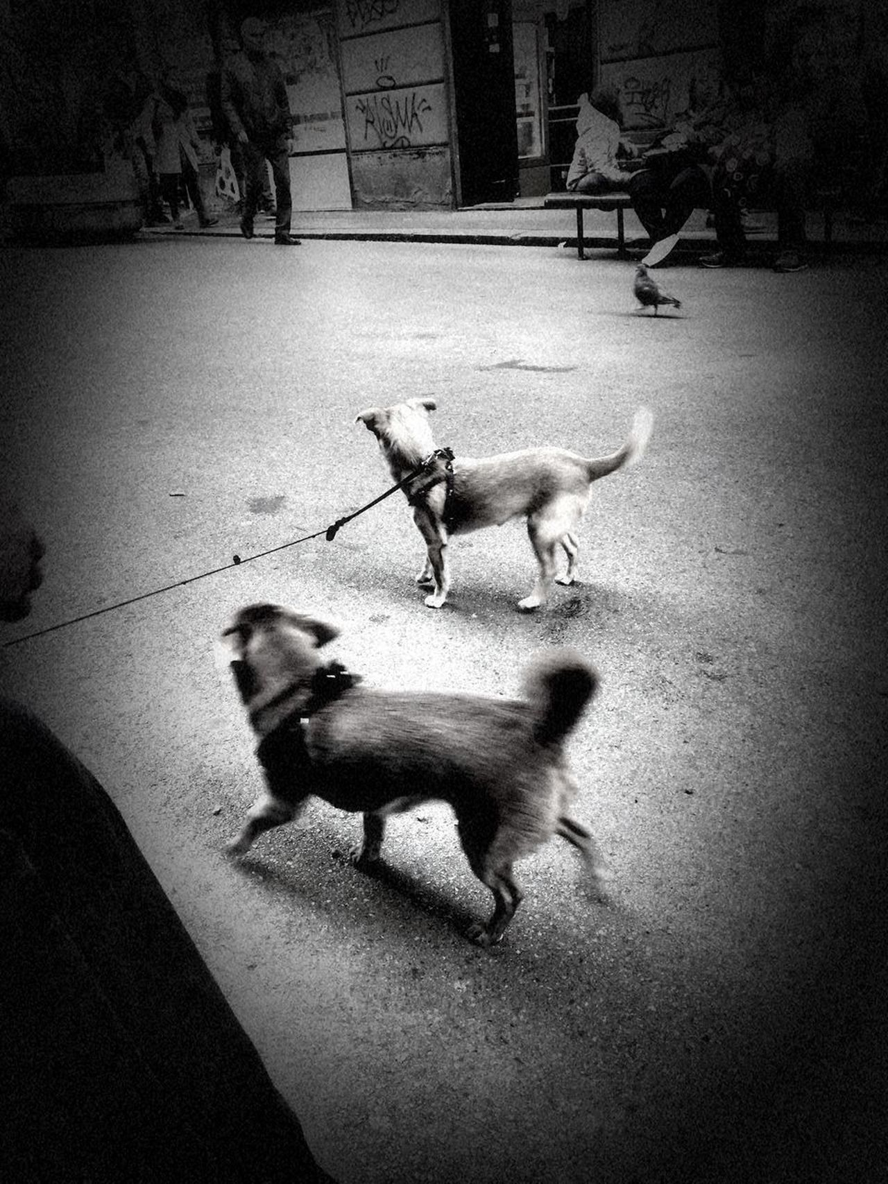 Animal Themes Day Dog Dog Lead Domestic Animals Full Length High Angle View Low Section Mammal No People Outdoors Pets Togetherness Vignette