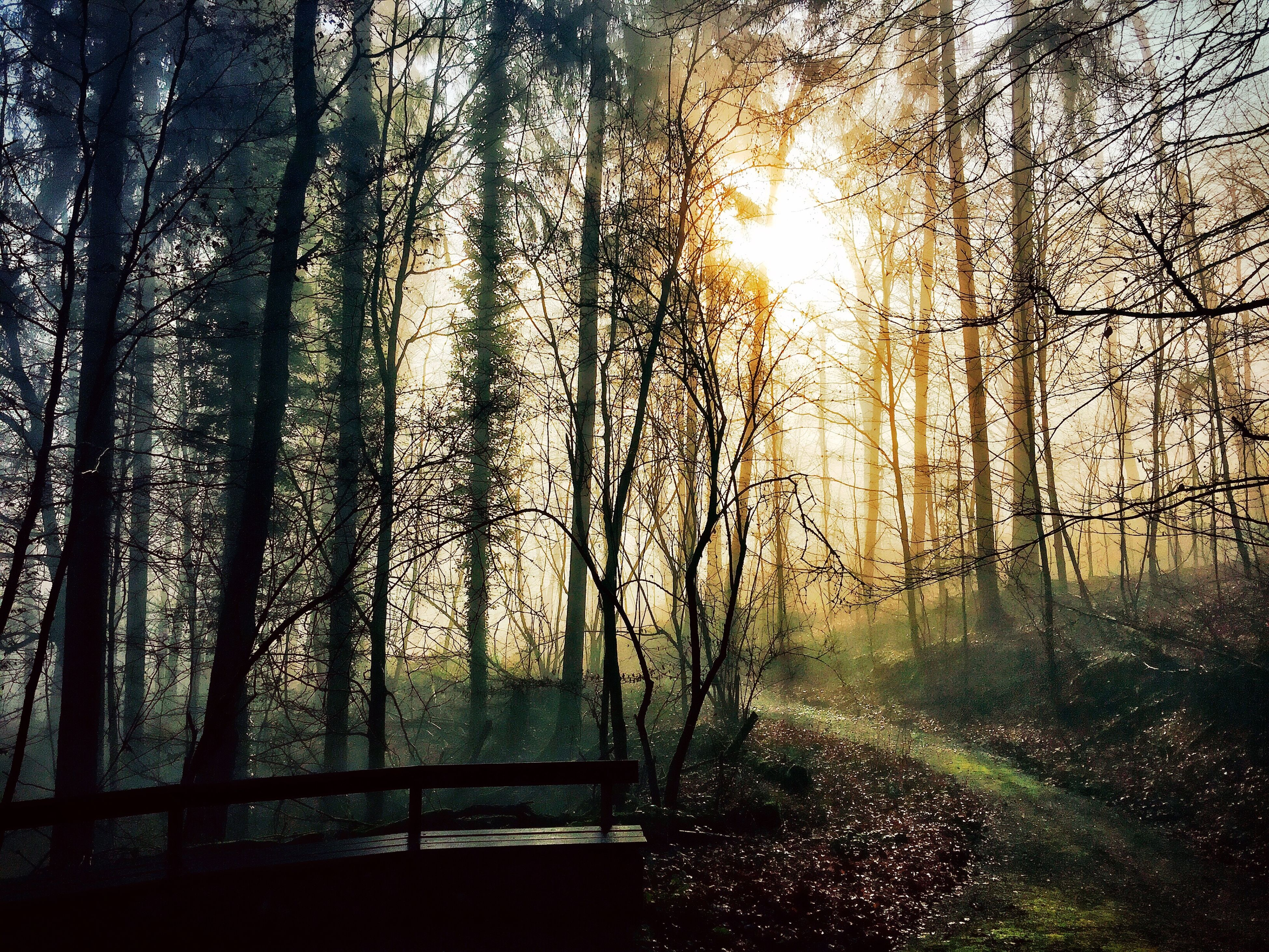 tree, tranquility, tranquil scene, sunlight, beauty in nature, scenics, forest, nature, tree trunk, growth, sun, sunbeam, woodland, branch, non-urban scene, idyllic, sunset, landscape, outdoors, railing