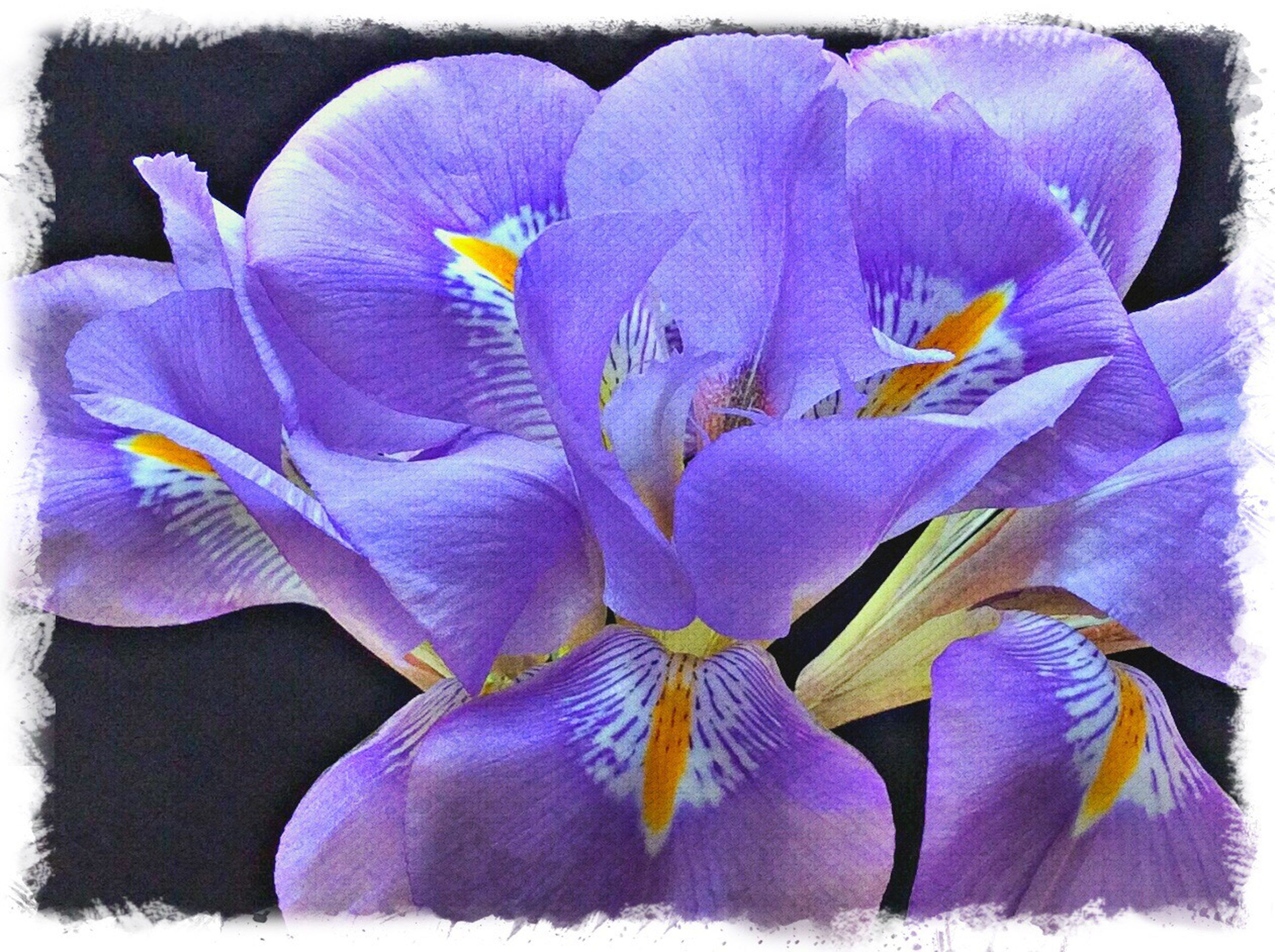 flower, purple, petal, flower head, transfer print, close-up, auto post production filter, fragility, freshness, blue, beauty in nature, nature, no people, multi colored, yellow, natural pattern, growth, art and craft, blooming, day