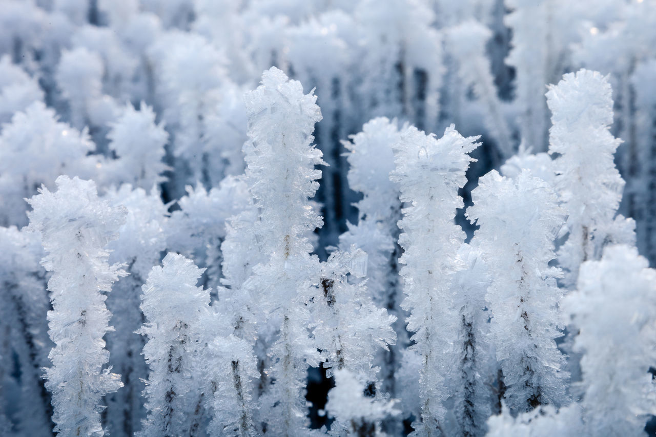 cold temperature, snow, winter, weather, frozen, nature, ice, white color, focus on foreground, cold, beauty in nature, no people, day, tree, outdoors, ice crystal, tranquility, close-up, snowflake, snowing