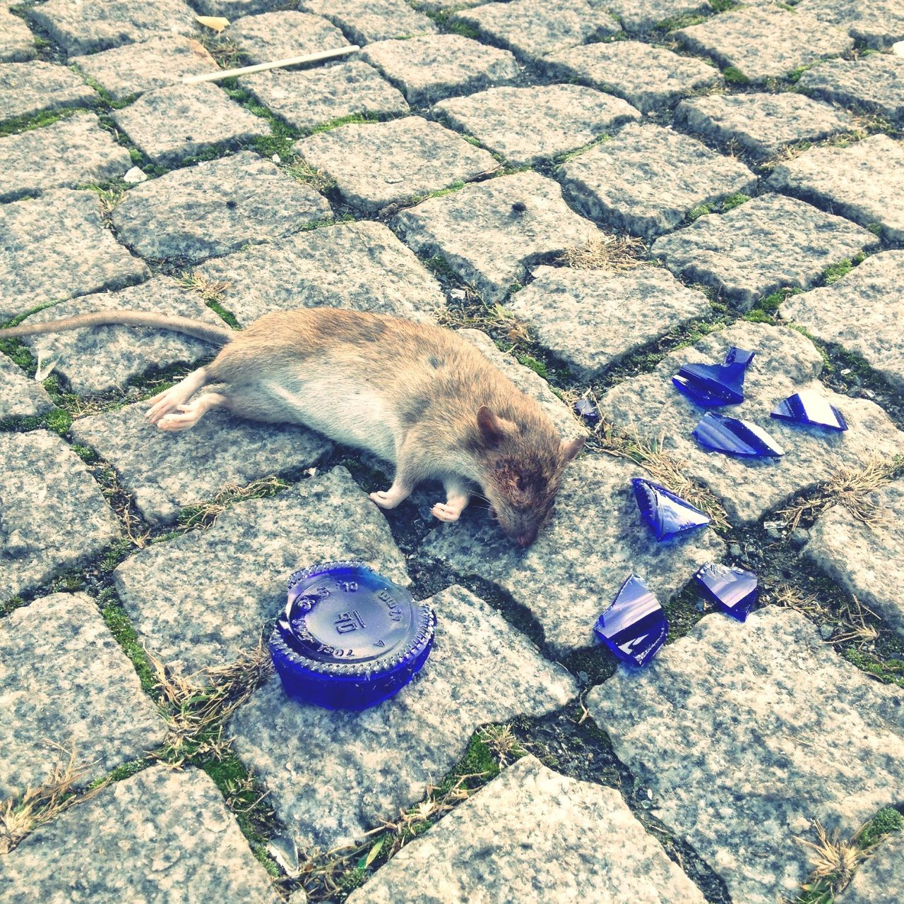 Beautiful stock photos of death, Animal Themes, Bottle, Broken, Cobblestone