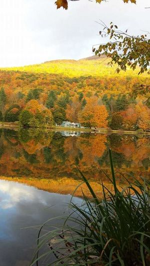 Good Morning Golden Hour Unfiltered Unaltered Unmotified True Colors Peak Fall Colors On The Pond Water Reflections Placid  Natures Beauty Green Mountain State