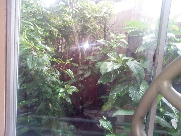 Erake ti.toi Window Plant Rainy Days