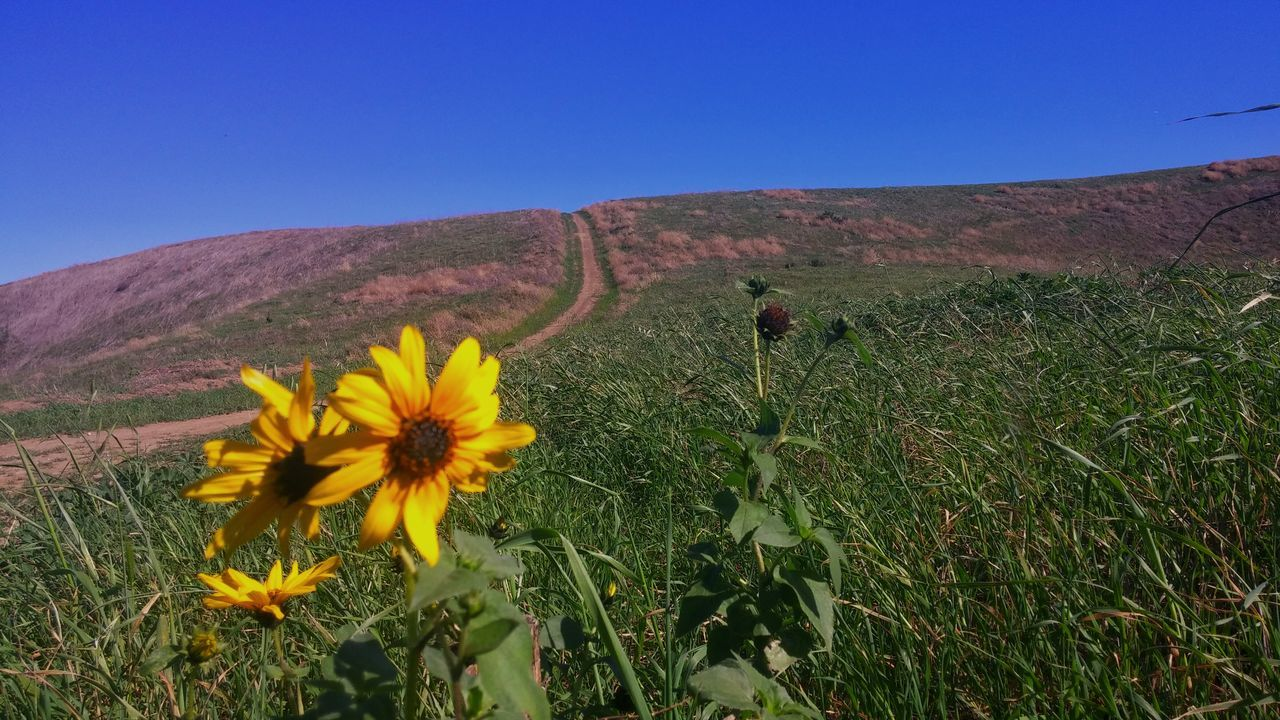Flowers Sunflowers Outside Landscape Eyeemfun Inspiration Enjoying Life Trail Hike HikeLife Eye4photography  Mood Healthy Active Pictureoftheday EyeEmbestshots Check This Out NEM Still Life EyeEmBestPics Inspirational Quote