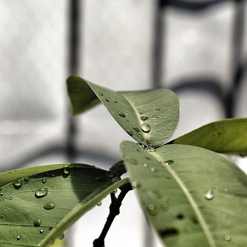 """""""water and green"""" Green Water Drop Fresh Canon EOS Vscocam Vscobdg VSCO Bandung INDONESIA Home"""