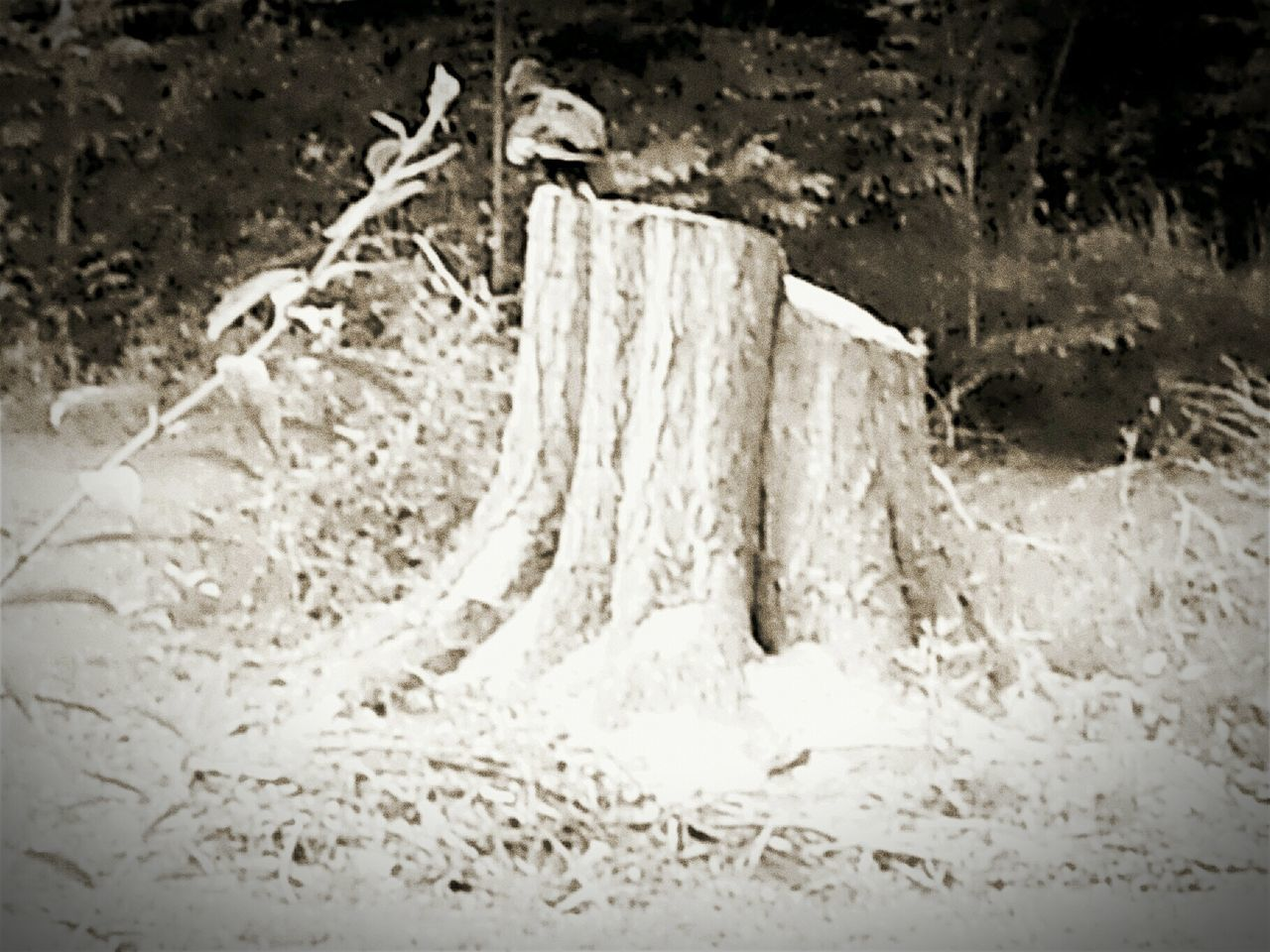 Buzzard  Broken Wing Tree Stump His New Home Bnw_friday_eyeemchallenge Black And White