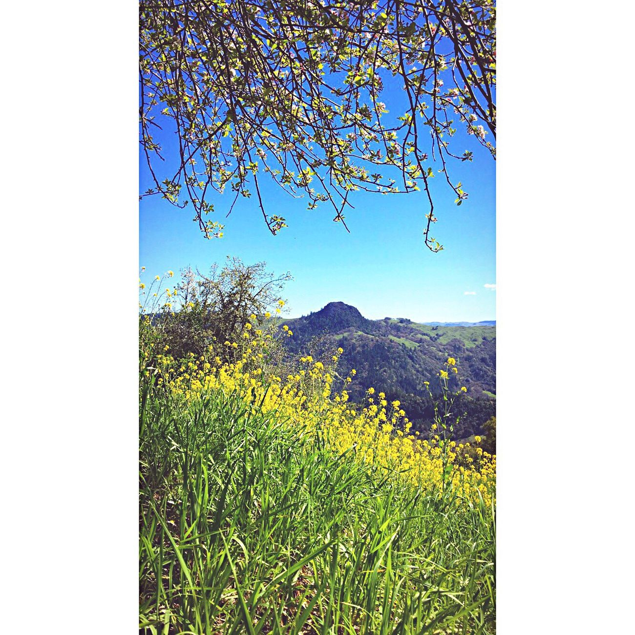 Beauty In Nature No People Scenics Homesweethome Day Nature Perfectview Outdoors Tranquility New Spot EyeEmNewHere
