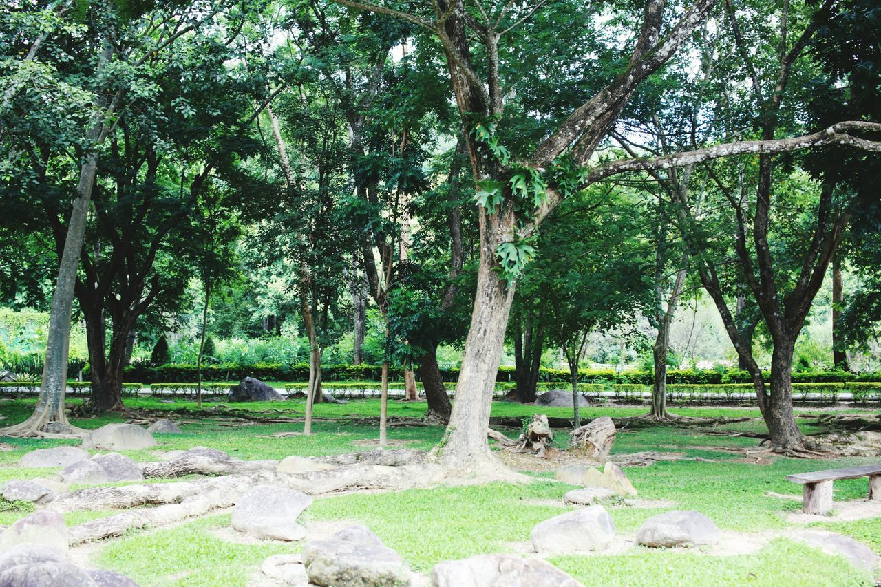 tree, nature, tree trunk, growth, tranquility, grass, landscape, beauty in nature, scenics, outdoors, tranquil scene, branch, no people, day, rope swing, scenery, sky