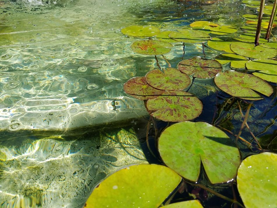 TakeoverContrast Water Floating On Water Reflection Leaf Pond Backgrounds Full Frame Moss Nature Day Green Color Lily Pad Outdoors Tranquility Weathered Water Lily Water SurfaceFine Art Photography Still Life Photography The Purist (no Edit, No Filter) Water Lilles Fountain Scenics Non-urban Scene