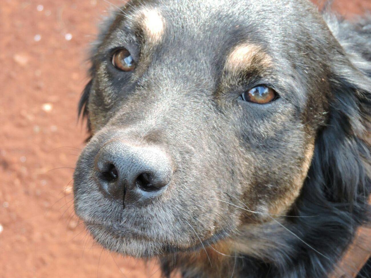 My dog , my puppy, my pet Loveyou♥
