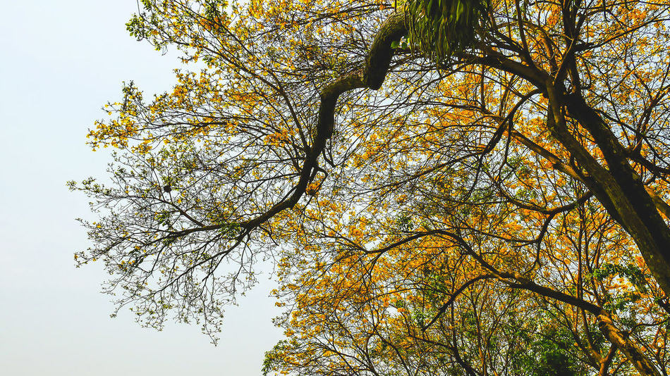 Autumn Beauty In Nature Branch Day Growth Leaf Low Angle View Nature No People Outdoors Scenics Sky Tranquility Tree