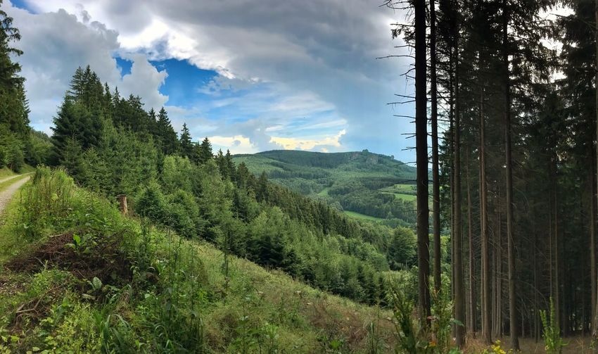 View Forest Tree Nature Landscape No People Mountain Cloud Bruchhauser Steine Rothaarsteig Panorama Tour Walking Path Way Trekking Point Of View Wood Green