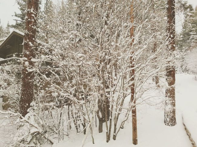Lake Tahoe Outdoors Trees Snow Snowcapped Mountain Winter Wonderland