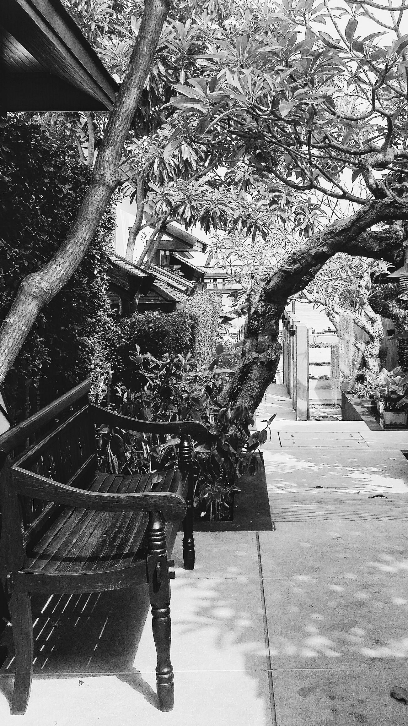 Bench Maenam Trees Villas Nature Naturephotography Naturecollection Naturelovers Koh Samui Thailand Travelphotography Eyeemcollection Eyeemphotography Eyeemkohsamui Eyeemthailand Bnw_kohsamui Bnw_thailand Bnw_travel Bnw_world Bnw_captures