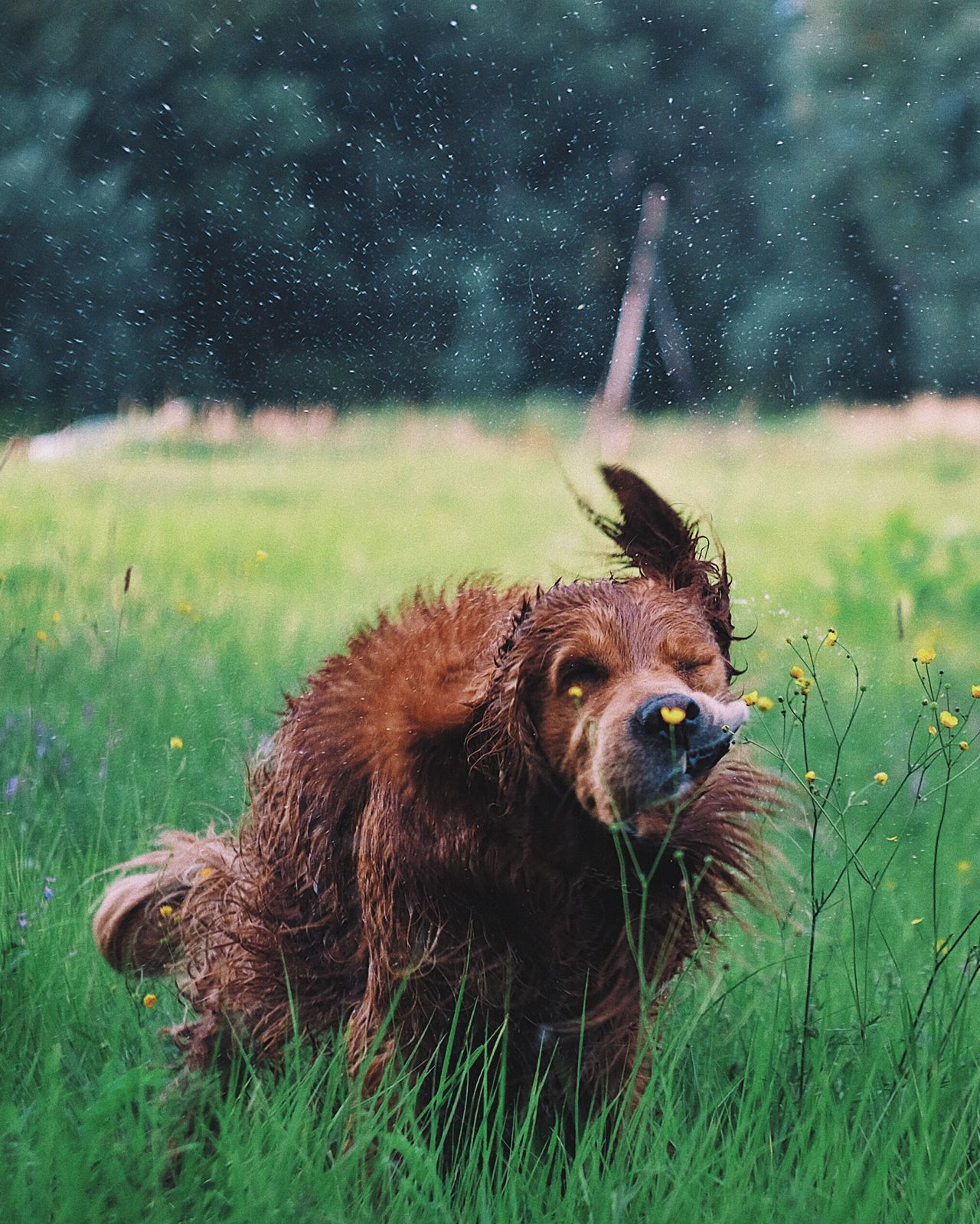 One Animal Grass Mammal Animal Themes No People Outdoors Day Nature Domestic Animals Animals In The Wild Close-up Fujifilm_xseries Nature Golden Retriever Sommergefühle