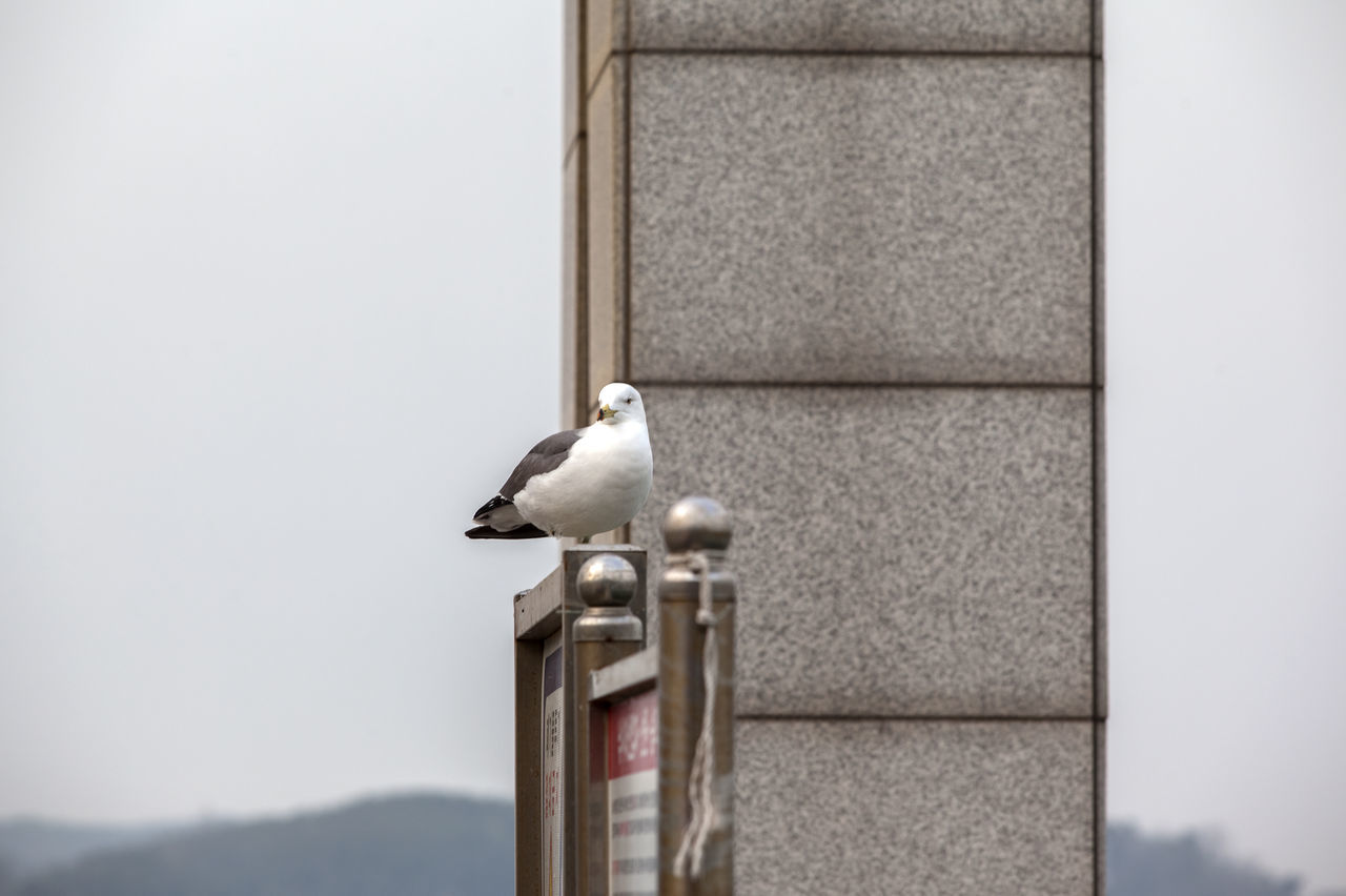 Bird Built Structure Close-up Day Focus On Foreground Nature No People Outdoors Perching Railing Relaxing Sea Gull Selective Focus The One Wild Life