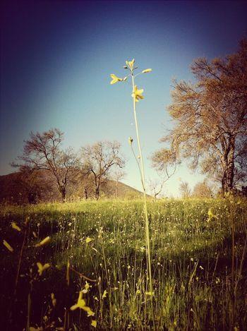 Landscape Spring Promenade The Minimals (less Edit Juxt Photography)