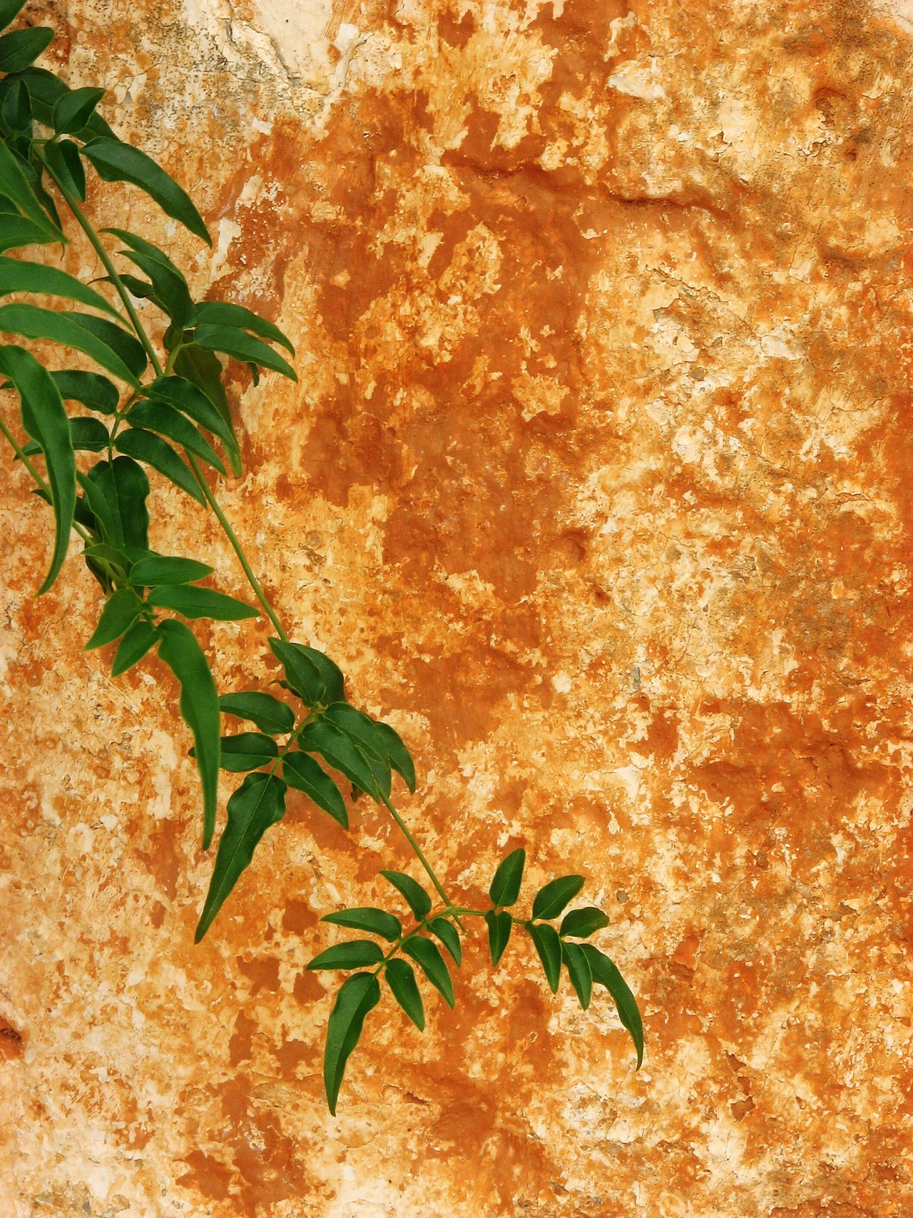 Ruin wall texture with foliage. Wabi-sabi Leaf Plant Growth Nature Green Color Flora No People Outdoors Beauty In Nature Day Branch Close-up Freshness Ruined Building Andalucia Rural Inspired By Beauty Awehaven's Andalucia