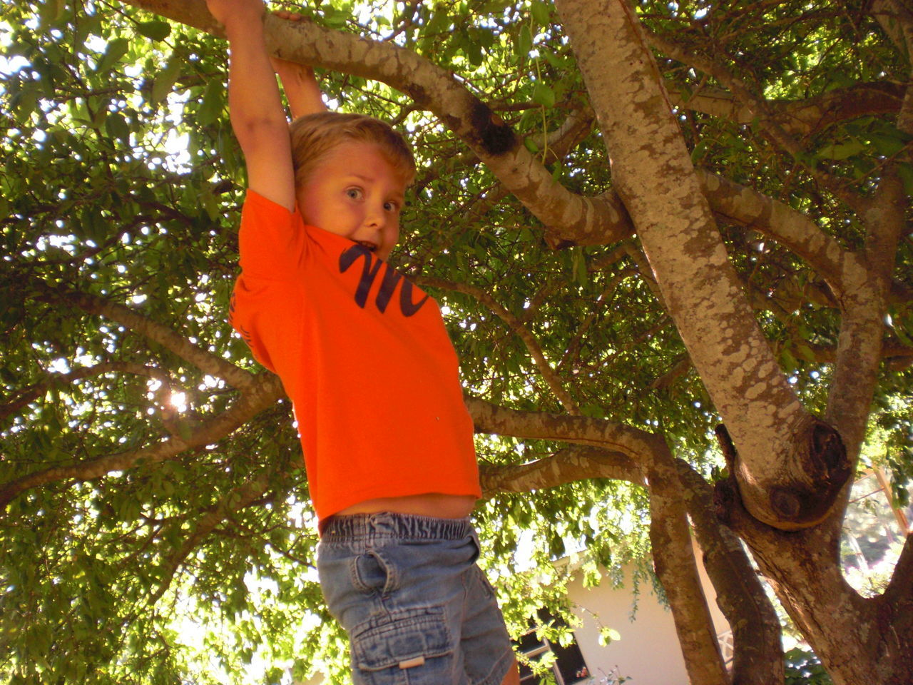tree, casual clothing, one person, childhood, boys, three quarter length, standing, looking at camera, low angle view, leisure activity, t-shirt, day, lifestyles, elementary age, one boy only, growth, outdoors, portrait, real people, branch, climbing, nature, people