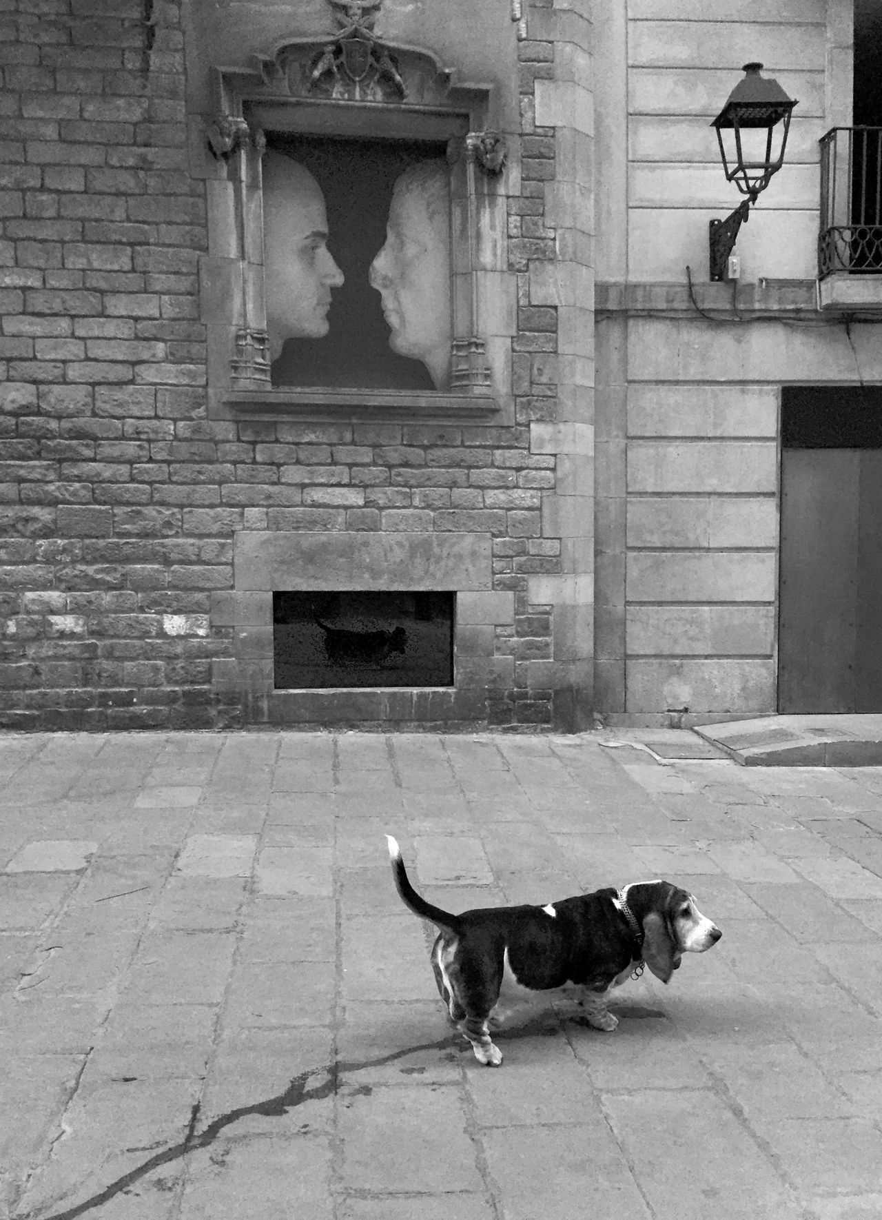 196 / 366 Animal Themes Architecture Building Exterior Candid Photography Dog Domestic Animals One Animal Pets Reflection Sidewalk Street Urinate Urinating Urinating In Public Wall - Building Feature Black&white Black & White Black And White