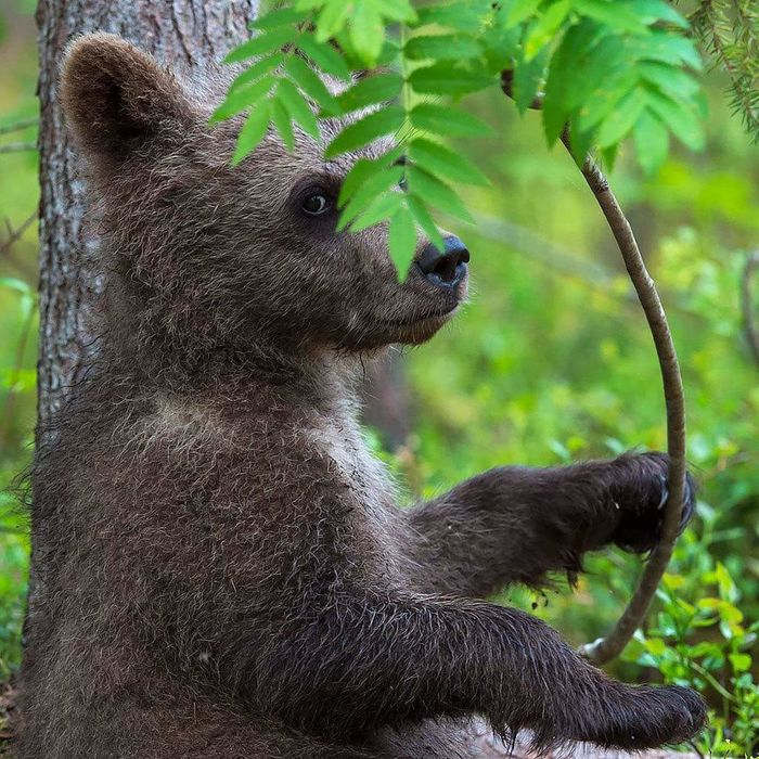 Animal_collection Nature_collection Taking Pictures Check This Out Animal Photography Awesome Bear Cub Bear Cute Sweet