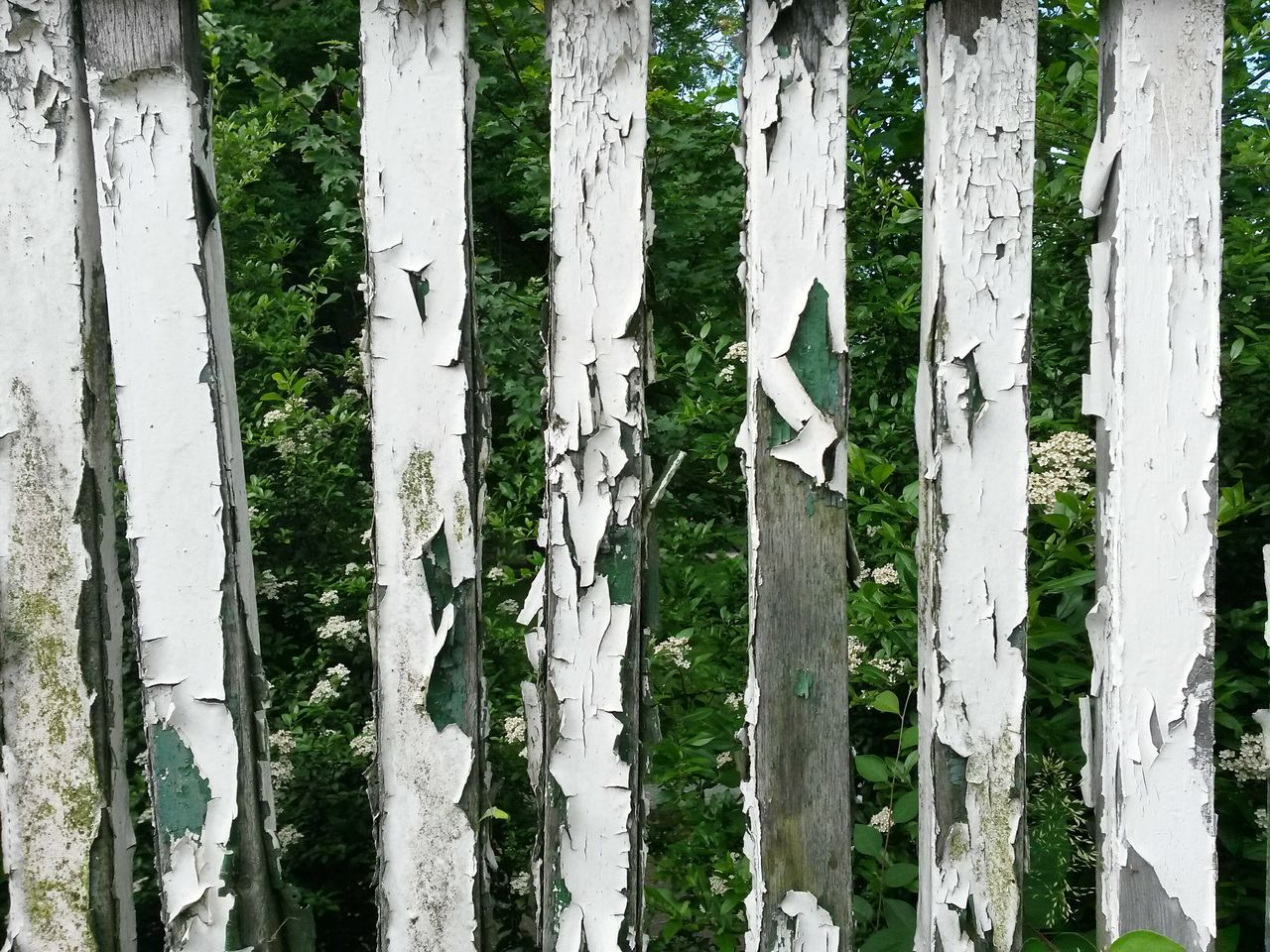Zaunfeld Fence Field Zaun Day White Color Wood - Material Outdoors Full Frame No People Textured  Tree Trunk Backgrounds Close-up Nature Fencepost Fences Fence Old Fence Weathered Fence Photography Fence Art Fence Post Fenceporn Fenced In Fenceline Fence Line