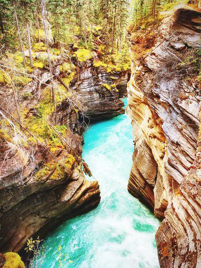Canada 🇨🇦 Canada Water Nature Tree First Eyeem Photo
