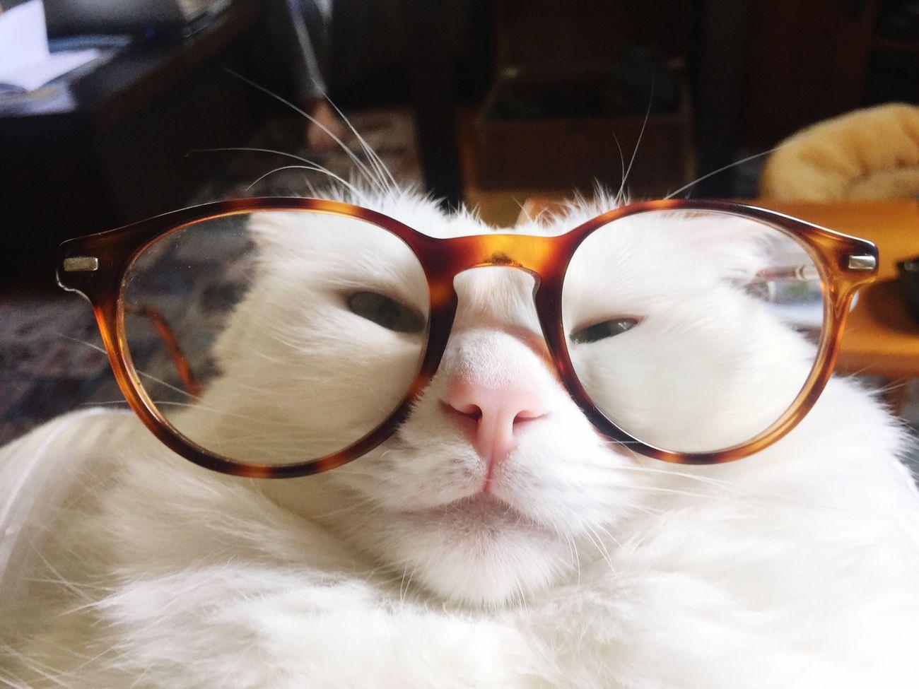 Cat Cat Lovers Lovecats Aybalam
