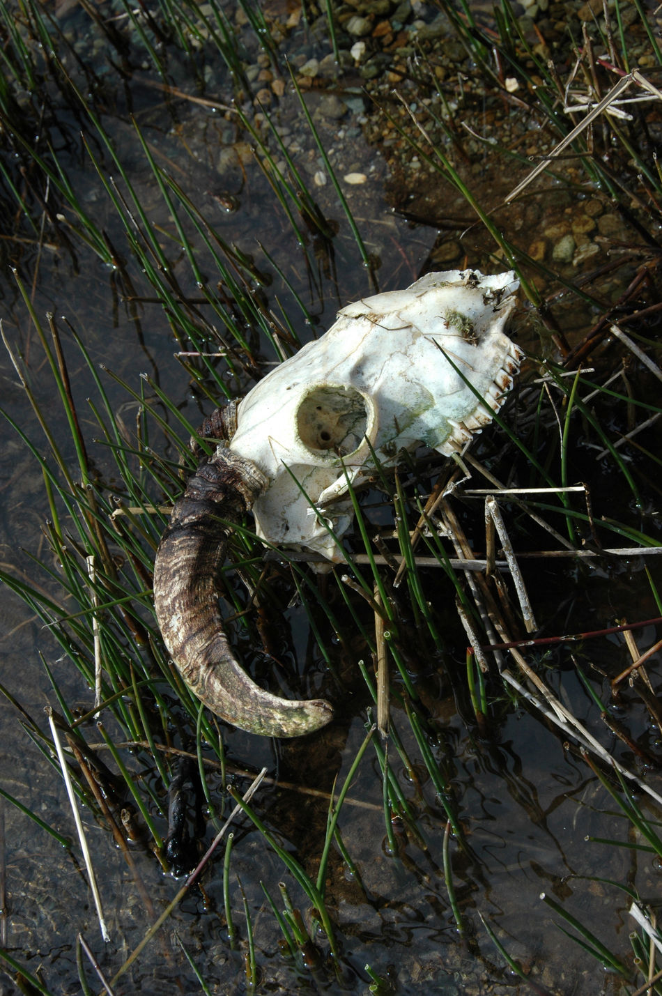 Beautiful stock photos of skull, Animal Skull, Close-Up, Day, Death