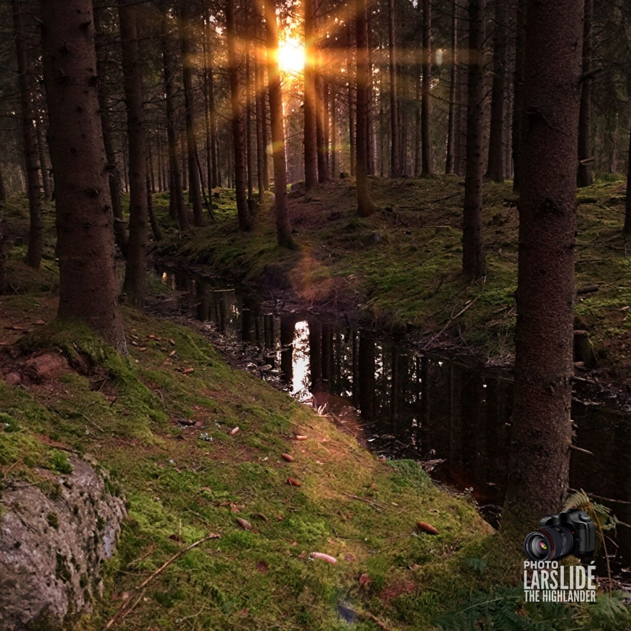 Forest Tree Landscape Nature Sunset Beauty In Nature No People Outdoors Countryside Taking Photos Winter Wilderness Tree Area WoodLand Cold Temperature